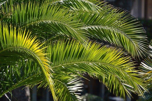 niedziela-palmowa-palma-saletynów