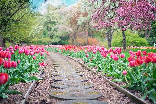 ścieżka-tulipany-saletyni-olsztyn