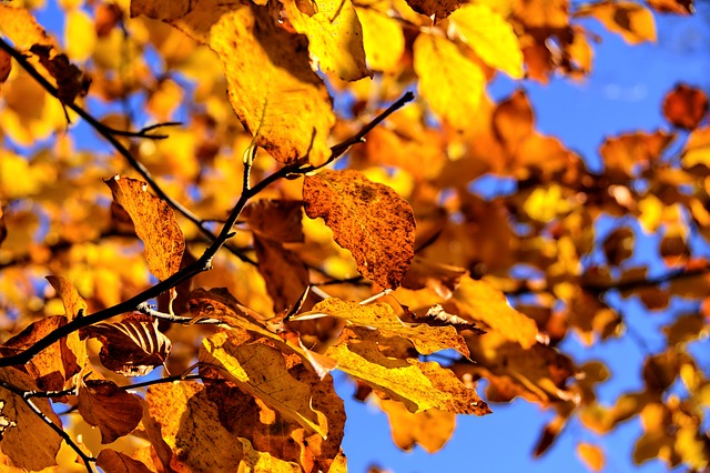 jesień-saletyni-olsztyn-liście