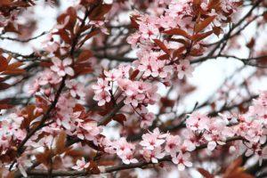 wiosna-maj-majówka-saletyni