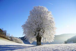 drzewo-zima-saletyni-olsztyn